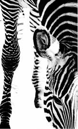 Zebra-6470- Elements collection by Rasch Textil