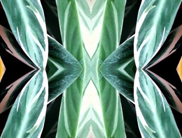 Newmor Iona Crawford tropics swatch 700x700